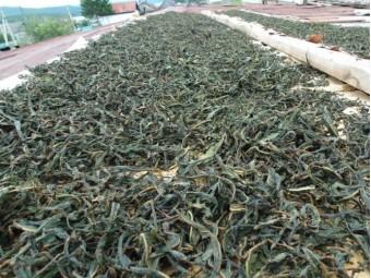 Зелений та чорний чай - найбільш поширені в світі чаї